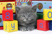 Cute Kitten Digital Art Posters - Alphabet Cat CK415 Poster by Greg Cuddiford