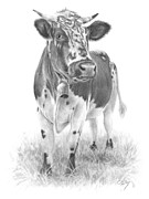 Alps Drawings - Alpine Cow by Chris Mosley
