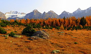 Alpine Larch Meadow Print by Ramona Johnston