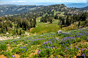 Awesome Prints - Alpine Meadow Print by Robert Bales