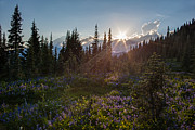 Mazama Photo Framed Prints - Alpine Meadow Sunrays Framed Print by Mike Reid