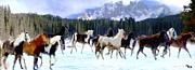 Western Art Digital Art - Alpine Ponies by Roger D Hale