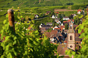 Grape Vineyard Prints - Alsace Morning Print by Brian Jannsen
