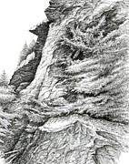 Tennessee Drawings Originals - Alum Bluff Trail Crag by Bob  George