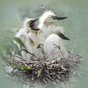 Ibis Framed Prints - Always One in a Crowd Framed Print by Betty LaRue