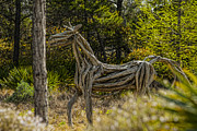 Horse Images Digital Art Prints - Alys Beach Driftwood Horse Print by Frank Feliciano