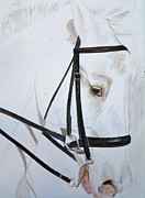 Horses Posters Painting Posters - Amadeus Poster by Sherry Matlack