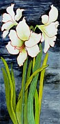 Signed Painting Prints - Amaryllis against a night sky Print by Joan Thewsey