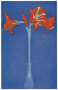 Piet Prints - Amaryllis in a Flask in Front of a Blue Background Print by Piet Mondrian