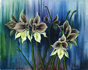 Fine  Art Framed Prints - Amaryllis Framed Print by Fine  Art