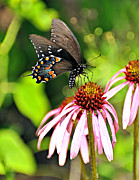 Marty Koch Metal Prints - Amazing Butterfly Metal Print by Marty Koch