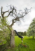 Bmx Posters - Amazing stretching exercise - BMX Flatland rider Monika Hinz uses a tree Poster by Matthias Hauser