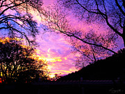 Lafayette Prints - Amazing sunset in my backyard Print by Susan Oppelt