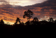 Amazonian Rainforest Prints - Amazon sunset Print by James Brunker