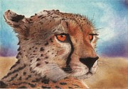 Cheetah Pastels Framed Prints - Amber Framed Print by Adrian Neale