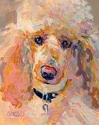 Poodle Paintings - Amber by Kimberly Santini