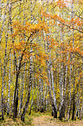 Cellular Metal Prints - Amber Season - Featured 3 Metal Print by Alexander Senin