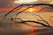 Gouzel - - Amber sunset