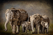 Concern Framed Prints - Amboseli Herd Framed Print by Mike Gaudaur