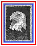 Fine American Art Drawings Posters - American Bald Eagle Red White Blue Poster by Jack Pumphrey
