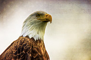 4th July Prints - American Bald Eagle with Flag Print by Natasha Bishop