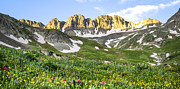 Tree Line Prints - American Basin Wildflowers Print by Aaron Spong