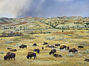 Usa Wildlife Prints - American  Bison Herd Grazing Print by Tim Fitzharris