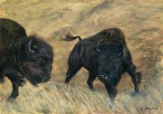 Interaction Paintings - American Bison by Tom Blodgett Jr
