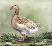 Geese Paintings - American Buff Goose by Carolyn Guske