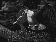 Nest Drawings - American Eagle by Heather Ward