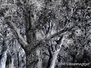 Suburban Drawings - American Elm by Jim Hubbard