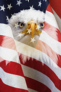 Flag Of Usa Digital Art Prints - American Flag and Bald Eagle Montage Print by Tim Gainey