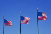 Flags Flying Prints - American Flags - Navy Pier Chicago Print by Christine Till