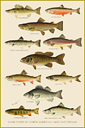Antique Digital Art Prints - American Game Fish Print by Gary Grayson