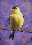Bird Paintings - American Goldfinch by Crista Forest