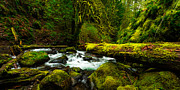 Columbia River Gorge Prints - American Jungle Print by Chad Dutson