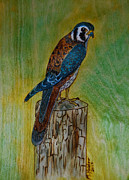 Hawk Pyrography - American Kestrel Falcon by Mike Holder