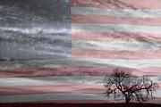James Bo Insogna - American Landscape