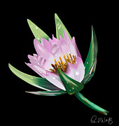 Photorealistic Framed Prints - American Lotus Vector Image Framed Print by Paul Wolf