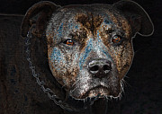 Attack Dog Photos - American mastiff by Tage Persson