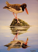 Catcher Painting Prints - American Oyster Catcher Print by Phyllis Beiser