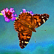 Antennae Digital Art - American Painted Lady Butterfly Bright Blue by Karen Adams