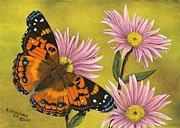 Painted Lady Butterflies Prints - American Painted Lady Print by Rick Bainbridge