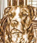 Michael Spano - American Pit Bull - Sepia Sketch