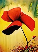 American Poppy Print by Kyle  Brock