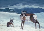 American Pronghorn Print by Tom Blodgett Jr