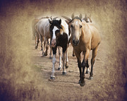 Old West Digital Art Posters - American Quarter Horse Herd Poster by Betty LaRue