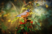 American Robin - Harbinger Of Spring Print by Lianne Schneider
