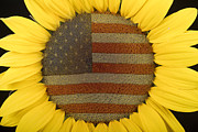 Usa Flags Framed Prints - American Sunflower Framed Print by James Bo Insogna