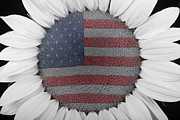Usa Flags Framed Prints - American Sunflower Power Framed Print by James Bo Insogna